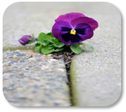 Photograph of flower growing in the cement